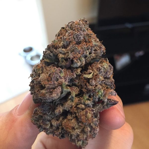 BUY PURPLE URKLE STRAIN ONLINEPurple Urkle's history is as complex as its flavor palate. A California strain, the origins are believed to stem